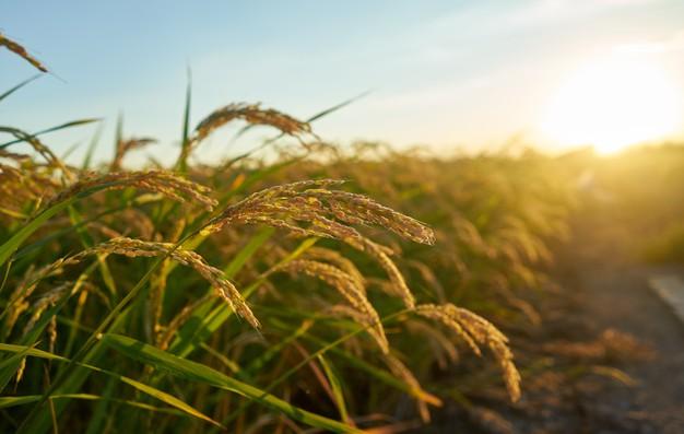 พืชเศรษฐกิจมาแรง ปี 2021